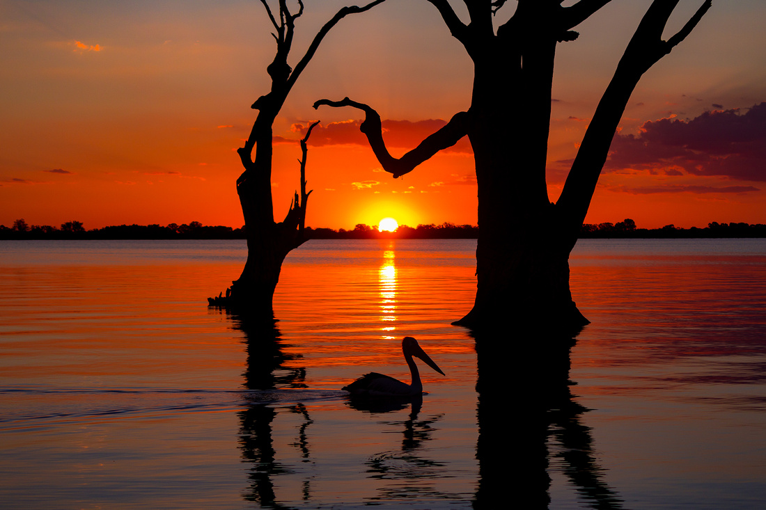 Lake Bonney Sunset Pelican