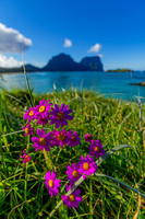 Lord Howe Flowers